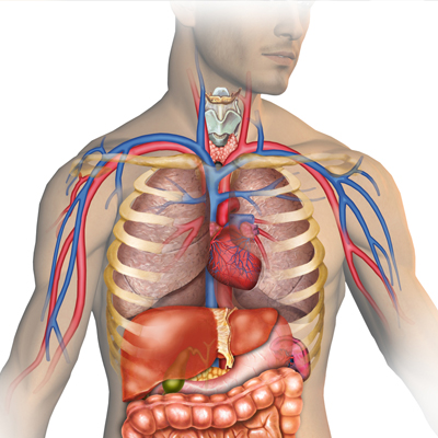 Csec human and social biology self paced cxc biology tutor fandeluxe Images